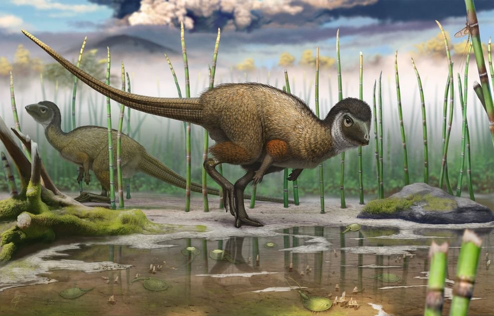 dinosaurs evolution / تکامل دایناسورها