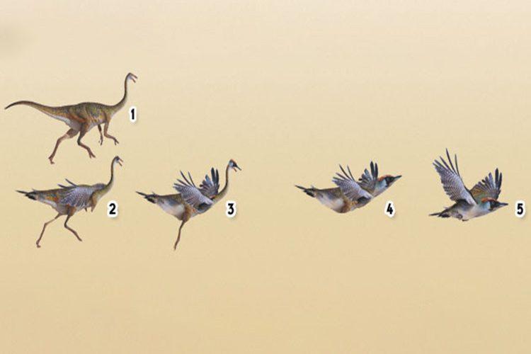 تکامل پرندگان / birds evolution