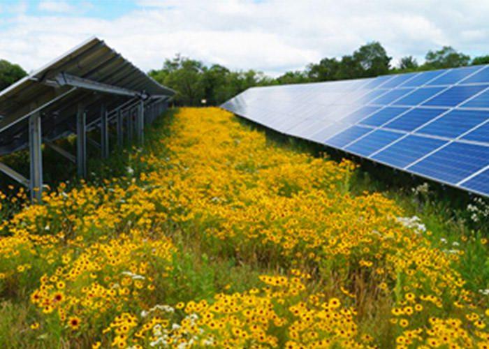 تولید غذا در مزارع تولید برق از خورشید
