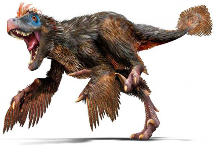 ولاسی راپتور / Velociraptor