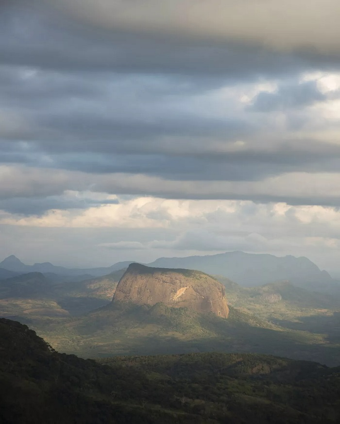اکتشاف لیکو جنگل افریقا موزامبیک