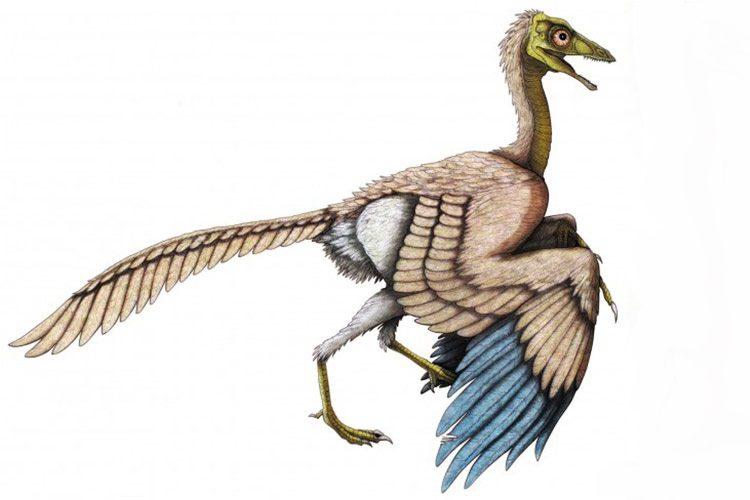 آرکئوپتریکس / Archaeopteryx