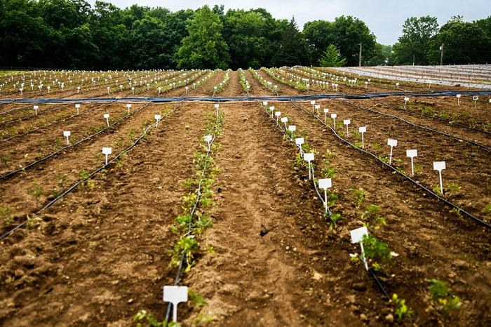 کشاورزی محصولات تراریخته