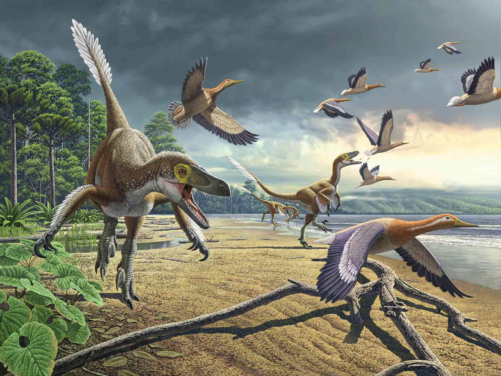 تبدیل دایناسورها به پرنده/ dinosaurs became birds