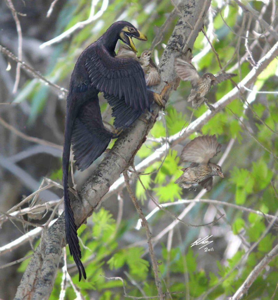 آرکیوپ تریکس / Archaeopteryx