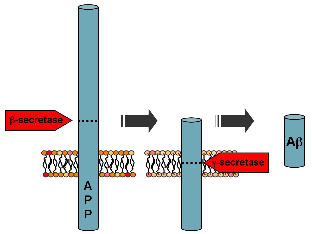 پروتئین / protein