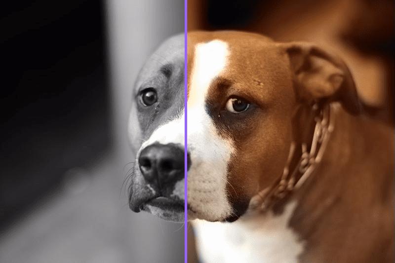 ۰۹ - تبدیل عکس سیاه و سفید به عکس رنگی