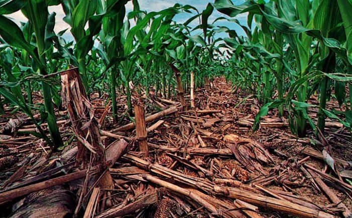 ترسیب کربن در خاک/Soil carbon sequestration