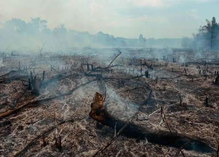 تخریب جنگل و گرم شدن جهانی