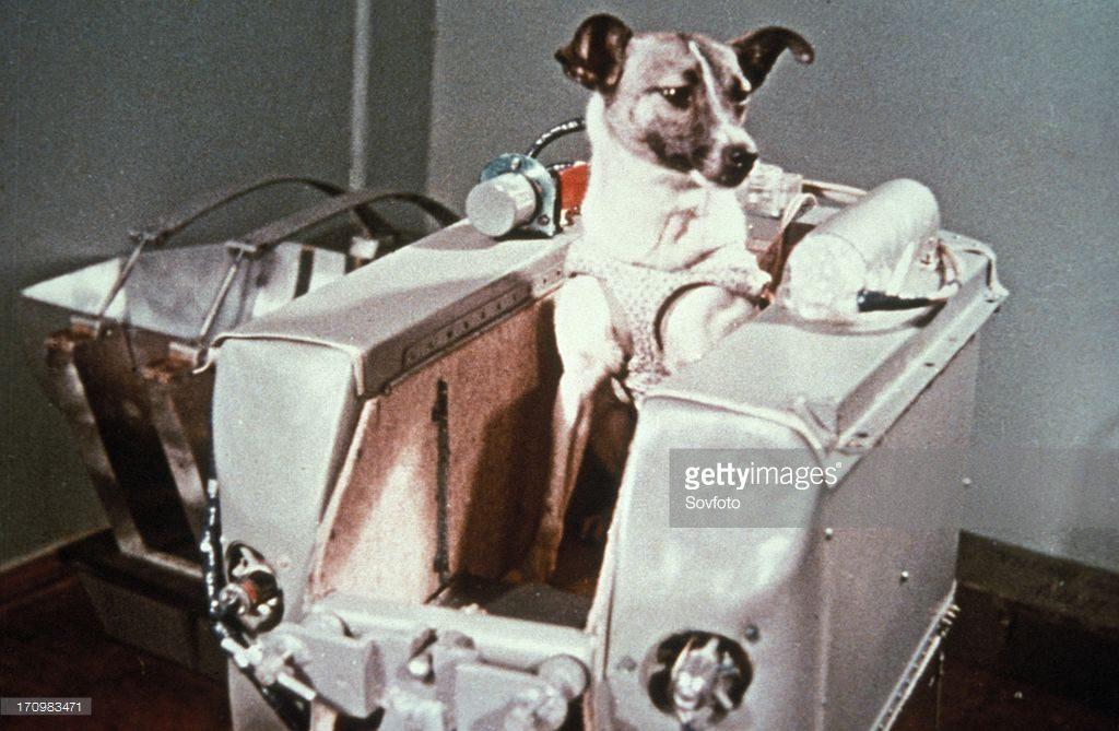 لایکا سگ فضانورد