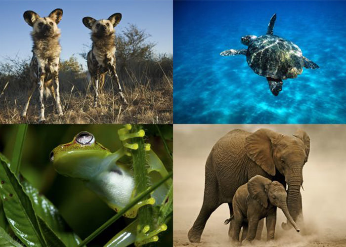گونه های در معرض خطر انقراض