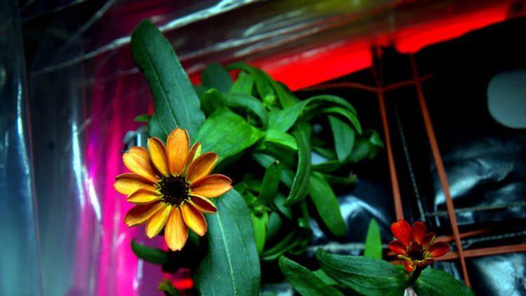 اولین گل تولد یافته در خارج از کره زمین