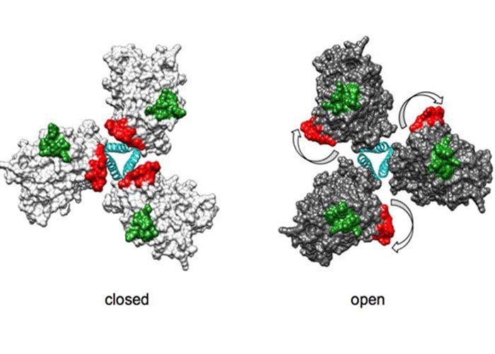 ساختار پروتئین پاکت HIV