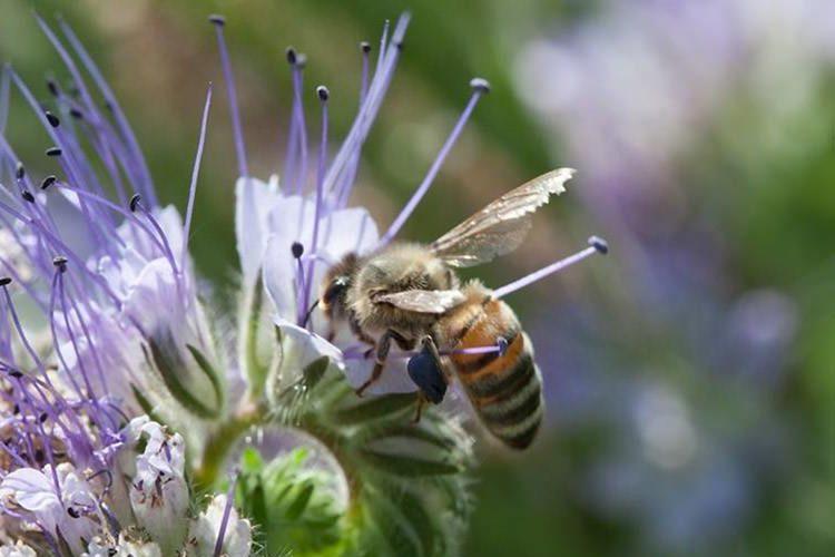 زنبور / Bumblebee