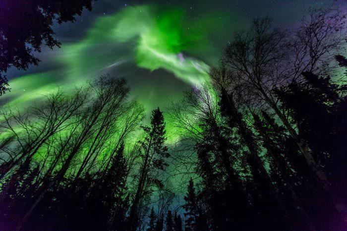 CATERS FIREBIRD ALASKA AURORA LANDSCAPE