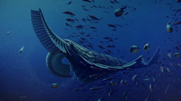 cambrian creatures