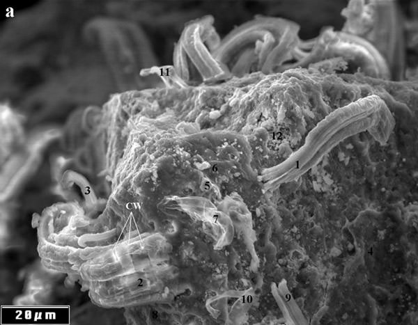 meteorite-bacteria-a