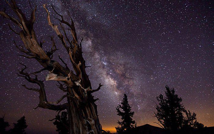 شبهای ستاره باران