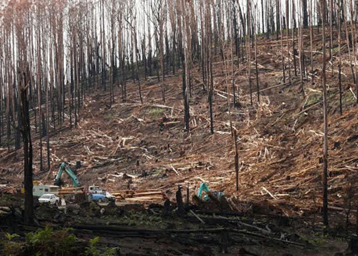 خاک آسیبدیده از آتشسوزی و قطع درختان، به احیا نیاز دارد.