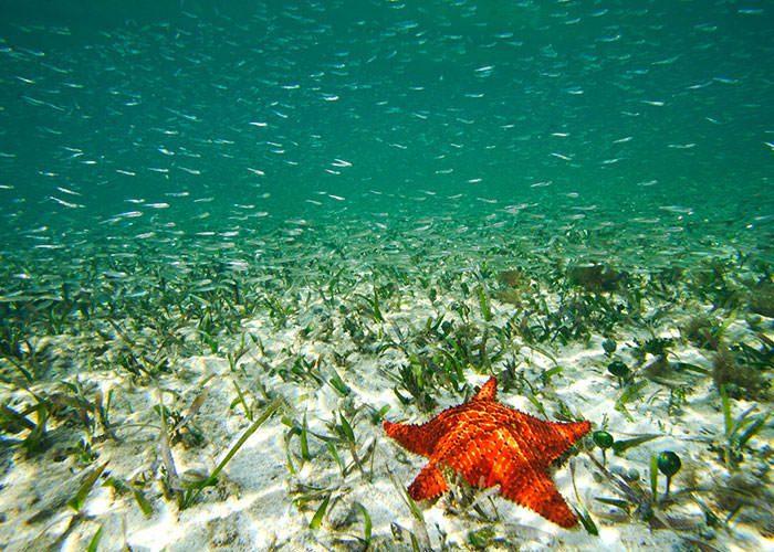 علفهای دریا