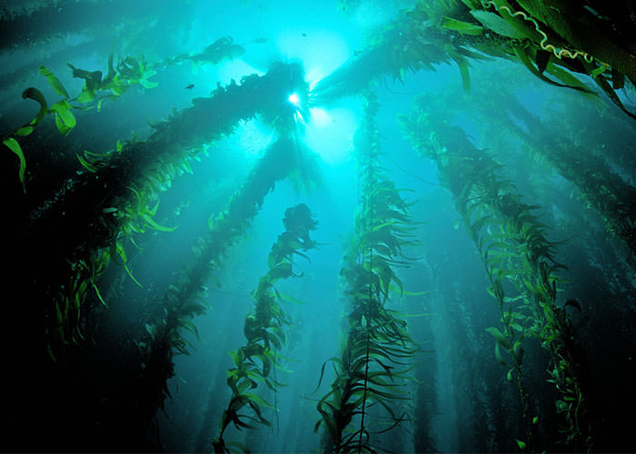 جنگلهای کتانجک
