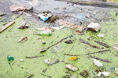 آلودگی آب مهم ترین عامل به خطر افتادن اکوسیستم تالاب انزلی گیلان