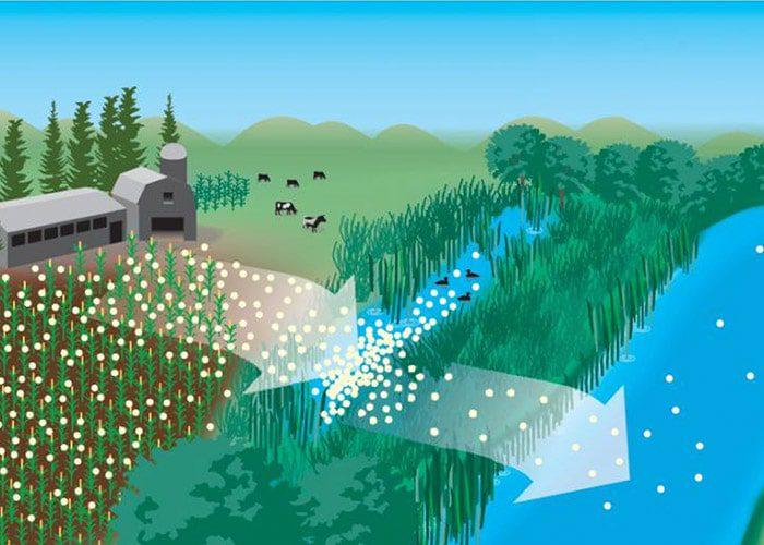 باکتریهایی وجود دارند که معمولا در میکروارگانیسمهای رودهای حیوانات نشخوارکننده یافت میشود.