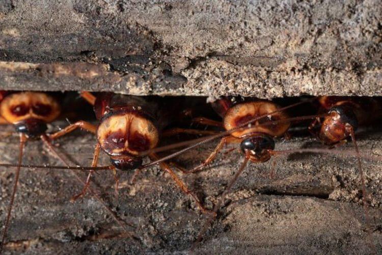 سوسکها که در دسته آفتها قرار میگیرند تحت شرایط گرمتر رشد بیشتری دارند