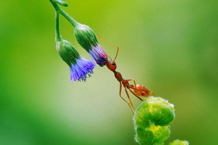عامل مهم در کاهش جمعیت حشرهها مثل زنبورها و مورچه ها افزایش مصرف آفتکشها می باشد