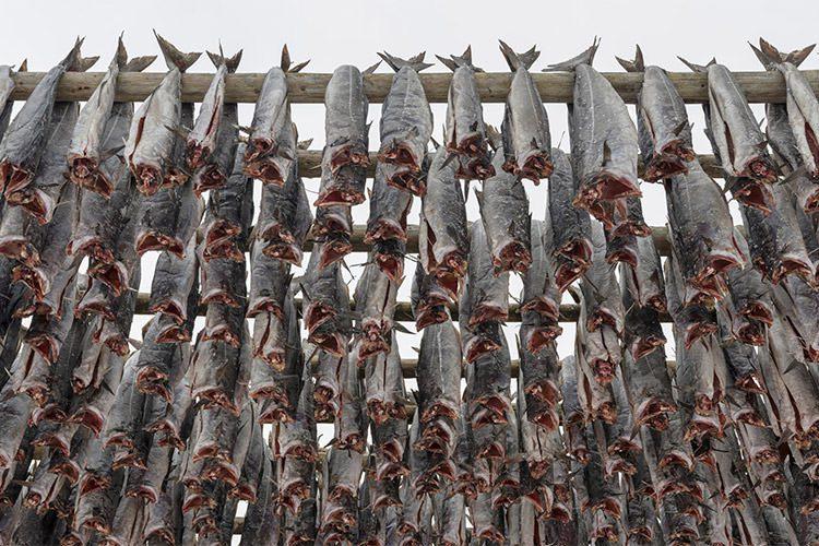 گرمایش جهانی تهدیدی برای منابع غذایی بویژه غذاهای دریایی+صید بی رویه ماهی توسط انسان